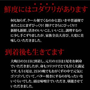 活伊勢海老 700g×1尾 徳島県産 天然伊勢エビ/産地直送/送料無料/|sancyokubin|03