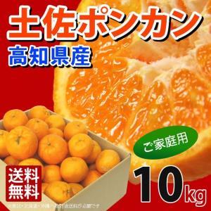 訳あり 土佐ポンカン 5kg 高知県産 産地直送/宅急便 送料無料/|sancyokubin