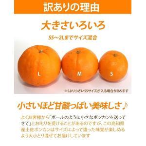 訳あり 土佐ポンカン 5kg 高知県産 産地直送/宅急便 送料無料/|sancyokubin|02