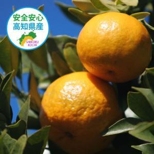 【予約】(1月19日発送)訳あり 土佐ポンカン 5kg 高知県産/送料無料|sancyokubin|03