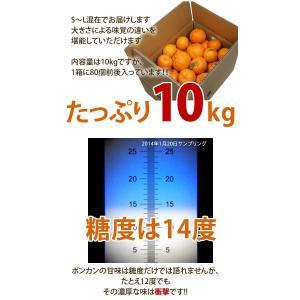 訳あり 土佐ポンカン 10kg 高知県産 産地直送/送料無料|sancyokubin|02
