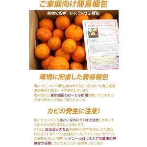 訳あり 土佐ポンカン 10kg 高知県産 産地直送/送料無料|sancyokubin|06