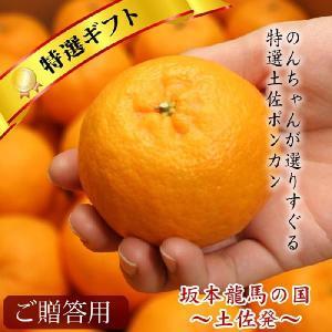 贈答用 土佐 ポンカン 5kg 高知県産 産地直送/送料無料 sancyokubin