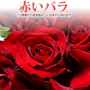 赤いバラ 50cm×1本 ※20本以上(花束)トゲ取り無料/産地直送/※お急ぎの方はお問い合わせください(平日0884-73-3944)|sancyokubin