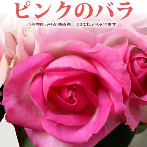 ピンクのバラ 50cm×1本 ※20本以上(花束)トゲ取り無料/産地直送/※在庫お問い合わせください(平日0884-73-3944)|sancyokubin