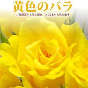 『父の日』黄色いバラ 50cm×1本 ※20本以上(花束)トゲ取り無料/産地直送/※急ぎの方はお問い合わせください(平日0884-73-3944)|sancyokubin