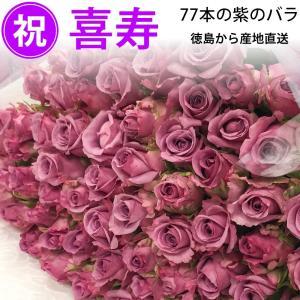 喜寿祝い 77本のバラの花束 紫 50cm 無料ラッピング/産地直送 送料無料/※お急ぎの方はお問い合わせください|sancyokubin