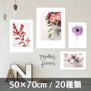 ポスター インテリア アートポスター お花 植物 おしゃれ  フォトポスター サンサンフー フラワーコレクション 50×70(フレーム なし)|sangsanghoo-jp