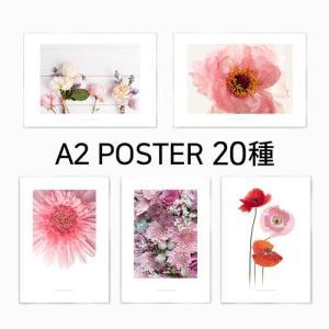 ポスター インテリア アートポスター  A2 お花 植物 おしゃれ  フォトポスター サンサンフー フラワーコレクション A2(フレームなし)|sangsanghoo-jp