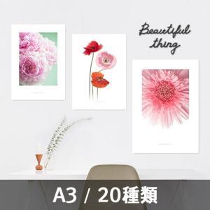 ポスター インテリア アートポスター お花 植物 おしゃれ  フォトポスター サンサンフー フラワーコレクション A3(フレームなし)|sangsanghoo-jp