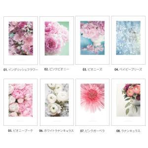 ポスター インテリア アートポスター お花 植物 おしゃれ  フォトポスター サンサンフー フラワーコレクション A3(フレームなし) sangsanghoo-jp 02