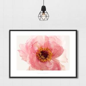 ポスター インテリア アートポスター お花 植物 おしゃれ  フォトポスター サンサンフー フラワーコレクション A4( フレームなし ) sangsanghoo-jp 15