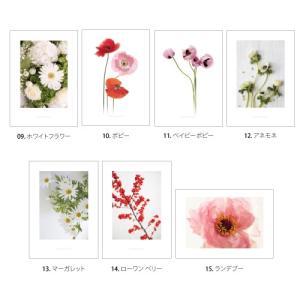 ポスター インテリア アートポスター お花 植物 おしゃれ  フォトポスター サンサンフー フラワーコレクション A4( フレームなし ) sangsanghoo-jp 03