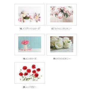 ポスター インテリア アートポスター お花 植物 おしゃれ  フォトポスター サンサンフー フラワーコレクション A4( フレームなし ) sangsanghoo-jp 04
