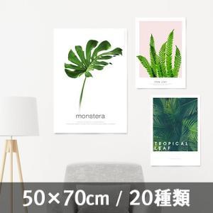 ポスター インテリア アートポスター 植物 おしゃれ フォトポスター サンサンフー リーフコレクション 50×70(フレームなし )|sangsanghoo-jp
