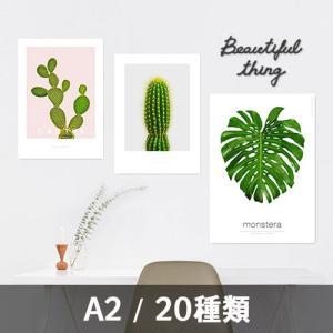 ポスター インテリア アートポスター 植物 おしゃれ フォトポスター サンサンフー リーフコレクション A2(フレームなし )|sangsanghoo-jp