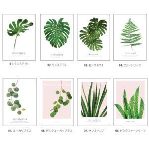 ポスター インテリア アートポスター 植物 おしゃれ フォトポスター サンサンフー リーフコレクション A2(フレームなし ) sangsanghoo-jp 02