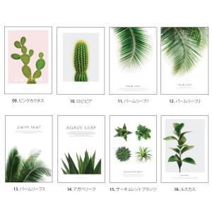 ポスター インテリア アートポスター 植物 おしゃれ フォトポスター サンサンフー リーフコレクション A2(フレームなし ) sangsanghoo-jp 03