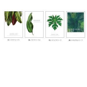 ポスター インテリア アートポスター 植物 おしゃれ フォトポスター サンサンフー リーフコレクション A2(フレームなし ) sangsanghoo-jp 04
