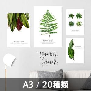 ポスター インテリア アートポスター A3 植物 おしゃれ フォトポスター サンサンフー リーフコレクション A3(フレームなし)|sangsanghoo-jp