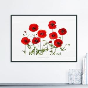 ポスター インテリア アートポスター  A2 お花 植物 おしゃれ  フォトポスター サンサンフー フラワーコレクション A2(フレーム付 )|sangsanghoo-jp|10