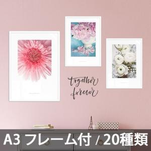 ポスター インテリア アートポスター  A3 お花 植物 おしゃれ  フォトポスター サンサンフー フラワーコレクション A3(フレーム付 )|sangsanghoo-jp