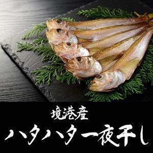 境港産白ハタ(ハタハタ)500g(10匹前後)|sankousuisan