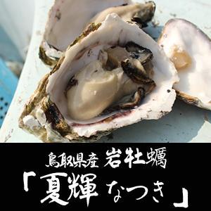 ギフトにもおすすめ! 漁獲量わずか10%のブランド牡蠣 天然岩牡蠣 夏輝(なつき)(生) 1個(400g前後) ×5個セット鳥取県産(送料無料)|sankousuisan