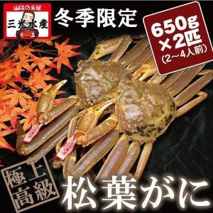 活きている松葉がに(松葉蟹)650g×2匹(2〜4人前) タグ付《送料無料》 |sankousuisan