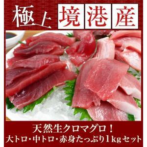 《送料無料》天然生クロマグロ(本マグロ)入荷 大トロ、中トロ、赤身セットたっぷり1kg[日本海 境港産近海本マグロ]|sankousuisan