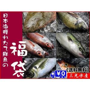 [送料無料]店長入魂「お得意様満足」日本海鮮魚の福袋 [当店人気No.1 中身はおまかせの鮮魚セット]|sankousuisan