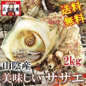 バーベキューでサザエの壺焼き山陰産 サザエ2.0kg(15〜20個)RCP|sankousuisan