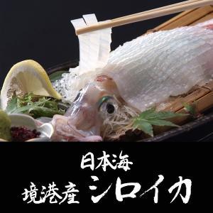 日本海境港産シロイカ中 5杯セット (送料無料)|sankousuisan