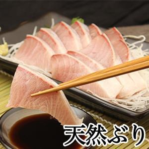 [緊急セール開催]日本海産 天然ブリ(寒鰤) 片身(半身)販売《送料無料》|sankousuisan