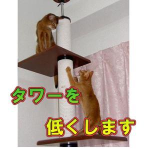 タワー全体を低くします (低い天井に適応させます)|sansei