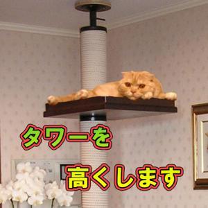2m50cmまでの天井を最適サイズにします|sansei
