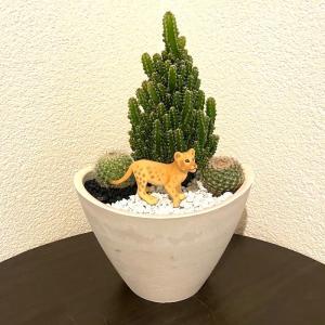 【受注生産品】ライオン 寄せ植え サボテン 観葉植物 インテリア グリーン ミニチュア かわいい 動物 フィギュア sanwapotitto