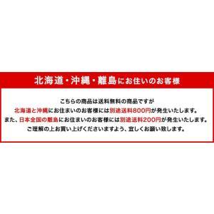 送料無料 コンバース ネクスター110 ローカット コアカラー 定番 スニーカー CONVERSE NEXTAR110 OX メンズ レディース 大きいサイズ メンズ 正規品|sanyuukutu|09