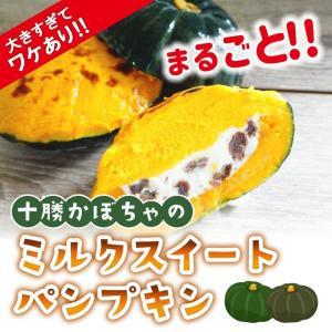 わけあり! 十勝かぼちゃのミルクスィートパンプキン 北海道 牛乳 スイーツ デザート わけあり パーティー アウトレット sapporo-rinkou