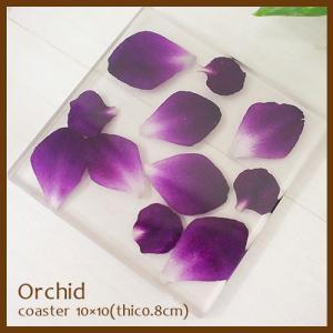 アクリル コースター orchid オーキッド 蘭 指定不可  sara-cera-y