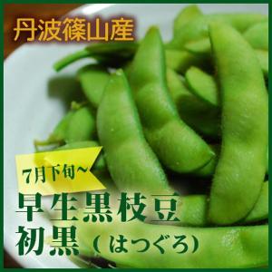 早生丹波黒枝豆 初黒 丹波篠山産500g  7月収穫 sasayama