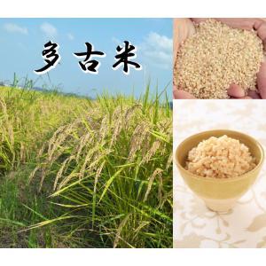 多古米 20kg 玄米 平成30年産 千葉県産 送料無料 幻の米 多古米|satono-okurimono