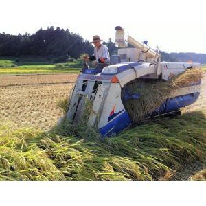 多古米 20kg 玄米 平成30年産 千葉県産 送料無料 幻の米 多古米|satono-okurimono|02