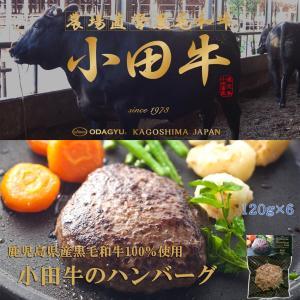 小田畜産 冷凍 ハンバーグ120g×6p|satou