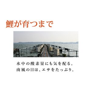 国産 鯉のあぶり刺身100g×3 コモリ食品 お中元のし対応可 sawayasouhonten 06