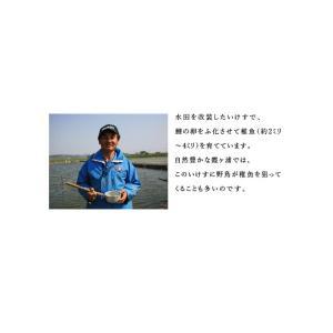 国産 鯉のあぶり刺身100g×3 コモリ食品 お中元のし対応可 sawayasouhonten 07