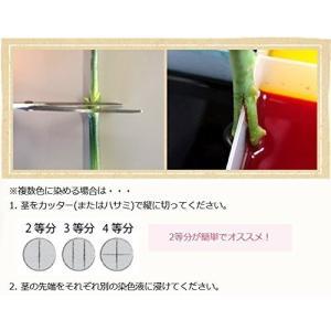 切り花染色剤 フラワーパレット グリーン|sazanamisp