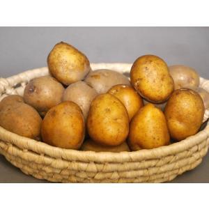 熟成インカのめざめ 5kg|scsjapan
