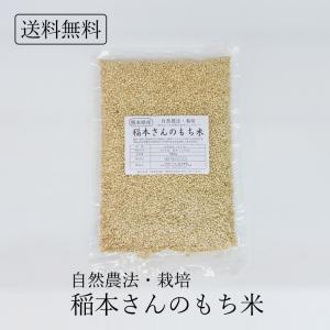 ポイント消化 自然農法・栽培 稲本さんのもち米(古代米) 熊本県産 5合 750g 無農薬・無化学肥料 安心 安全 送料無料|seedleaf