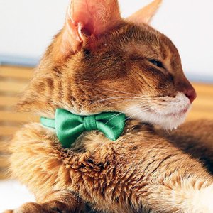 necono ネコノ 猫の首輪 おしゃれ かわいい Luce Ribbon ルーチェ リボン|sefety-shop